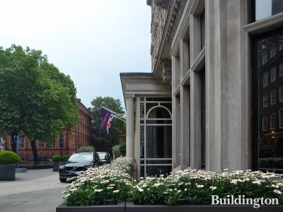 Daisies in front of The Connaught hotel in Mayfair, London W1.
