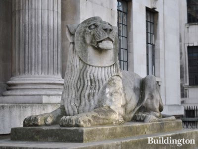One of the two lions in front of Marylebone Town Hall.