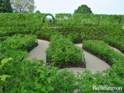 Kensington Palace. The newly created Wiggly Walk immersed in the midst of hardy native Hornbeam hedging.